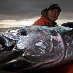 Il tonno bisogna pescarlo rispettando leggi e quote. In branchi numerosi e sconquassano l'acqua inseguendo prede a galla. Sfidateli a popping.