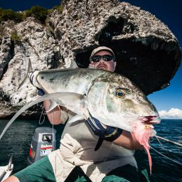 Carangidi, Game Fish ambiti dai fisherman di tutto il mondo.