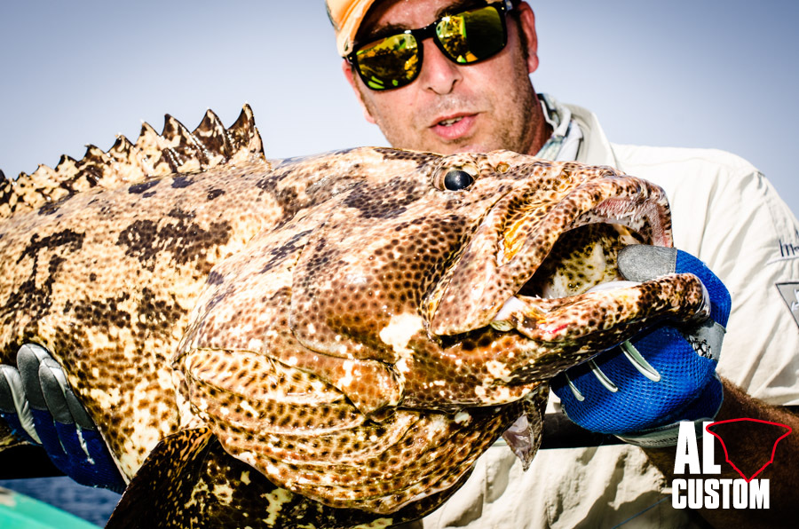 A photogenic grouper of Indian Ocean