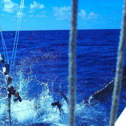 A pesca di magnifici fisherman in traina d'altura: il salto di un pesce vela