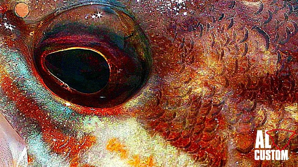 FISHING ATTITUDE - perchia
