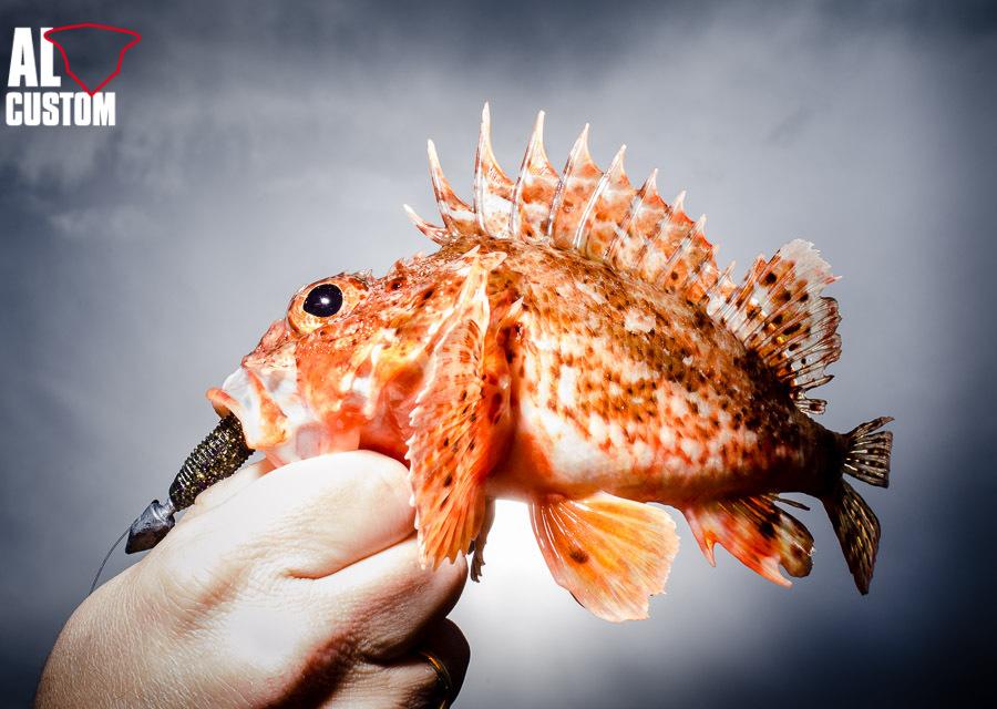 La pesca Light Rock Fishing: pura tecnica, per piccole prede.