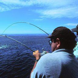 Strike multipli nelle acque della Nuova Zelanda: marlin all'Astrolabe Reef