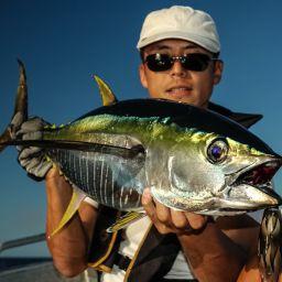 I TONNI PINNA GIALLA veloci e potenti, si pescano con popper e varie esche artificiali.