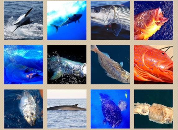 a pesca di: tonno, cernia, bonefish, marlin, tarpon