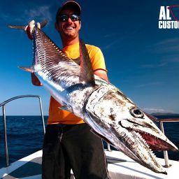 Madagascar: spinning al narrowbarred mackerel, un predatore combattivo dalla dentatura pericolosa.