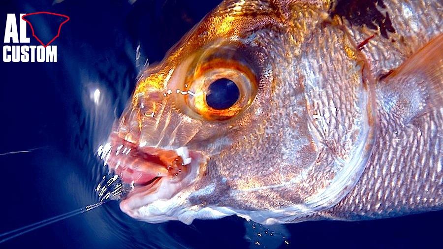 Pesca a bolentino di profondità: cernie ed occhioni prede classiche ed ambite.
