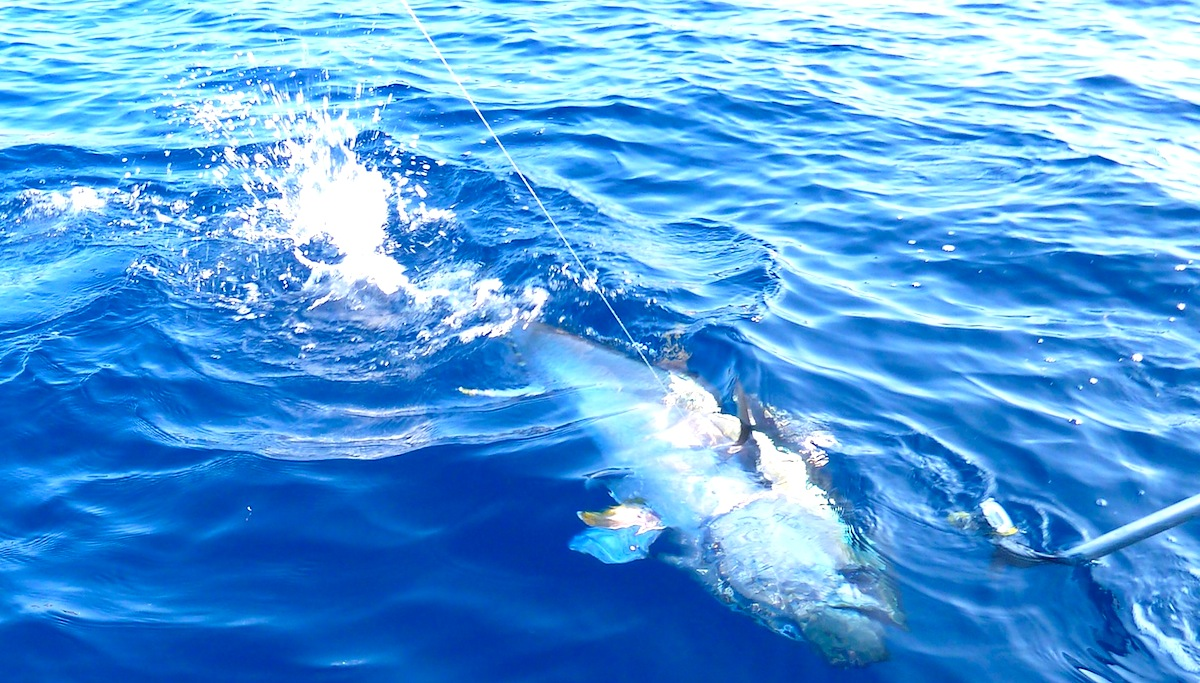 Pesca al tonno in Top Shot. Fisherman AL CUSTO AL21