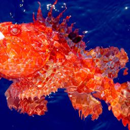 Lo scorfano rosso è una tra le prede più ambite della pesca ancorati. Le sue carni particolarmente pregiate sono ricercatissime da chi unisce la passione della pesca a quella della buona tavola