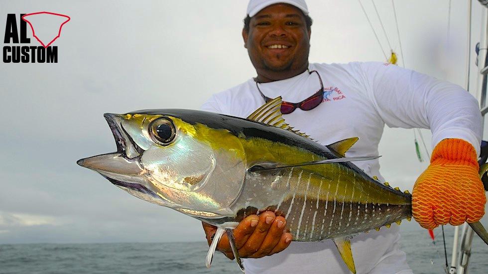 Il tonno pinna gialla, nel Mediterraneo non esiste. Il signore del nostro mare è il tonno rosso,