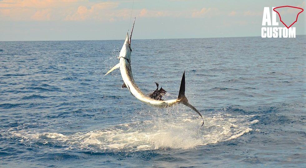 Per il pesce vela la tecnica di pesca più utilizzata, specie quando l'angler e l'equipaggio sono affiatati, è quella del bait & switch. 23