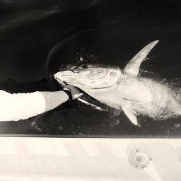 """AL CUSTOM AL25 """"Malefica"""": drifting al tonno e catch and release"""