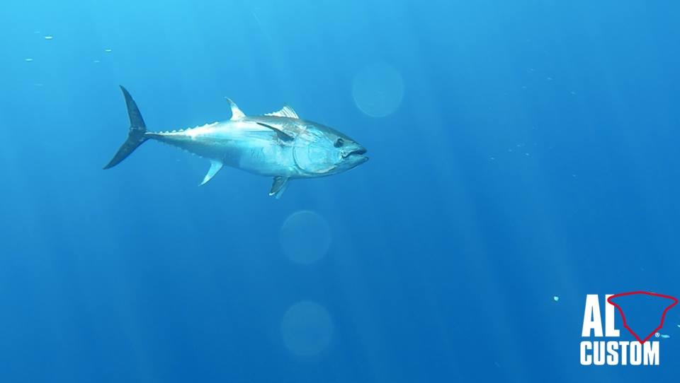 """fisherman AL21""""Hottuna"""" crew: tuna catch and release"""