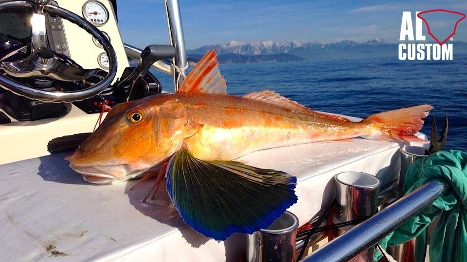 Fishing boat AL CUSTOM AL21 Caranx: gallinella nel Golfo di La Spezia