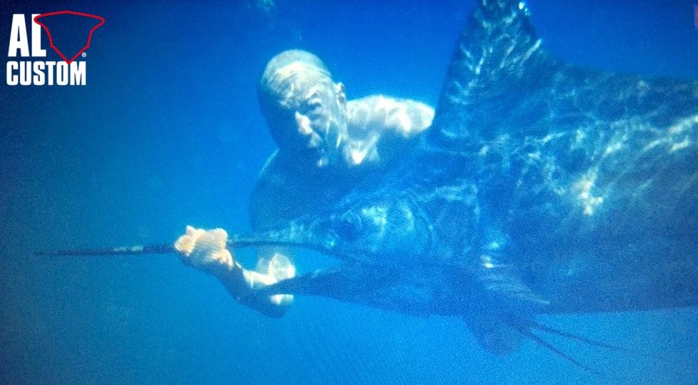 Black marlin: immagine subacquea dalla GoPro. Fase finale del catch and release