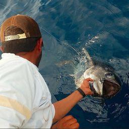 Fishing boat ALCUSTOM AL21: drifting al tonno catch and release