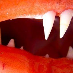 Predatori e grufolatori: i diversi apparati boccali.