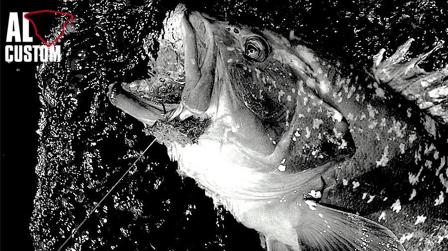 Fishing Attitude: cernia. Cattura a traina col vivo