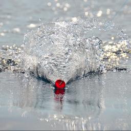 Fishing Tackle: popper. Esca artificiale di superficie. Tecnica di pesca e prede