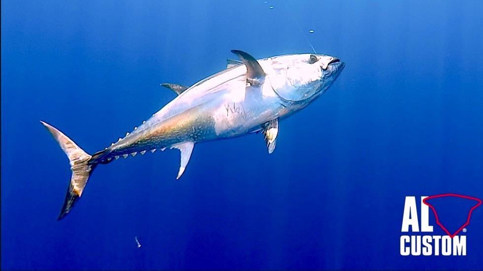 Drifting al tonno in catch and release. La pesca sportiva al tonno in Mediterraneo.