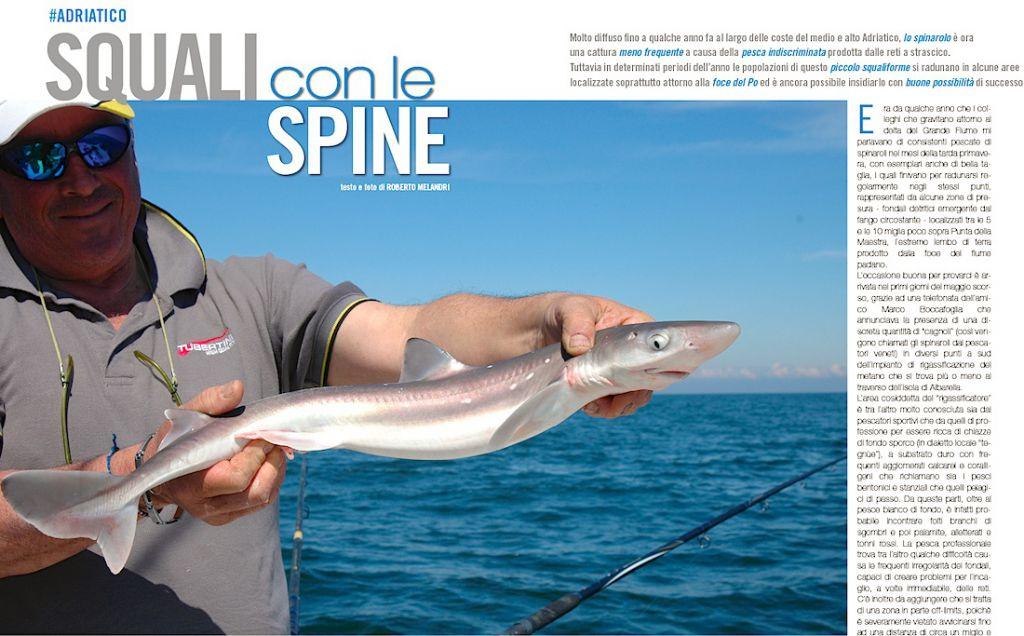 Spinerolo, piccolo squalo molto presente alla foce del Po. Studiamone la tecnica di pesca