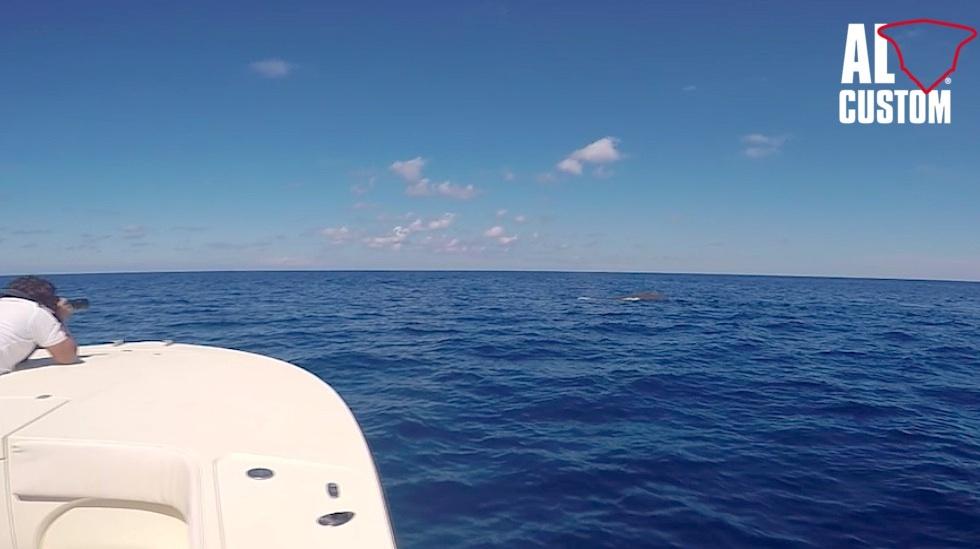 Fishing boat ALCUSTOM AL30: avvistamento capodoglio in Mediterranea al largo di Stromboli