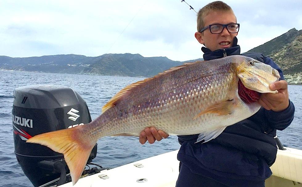 dentice a traina col vivo. Saint-Florent (Corsica) uscita di pesca sulla fishing boat ALCUSTOM AL21 Matrix