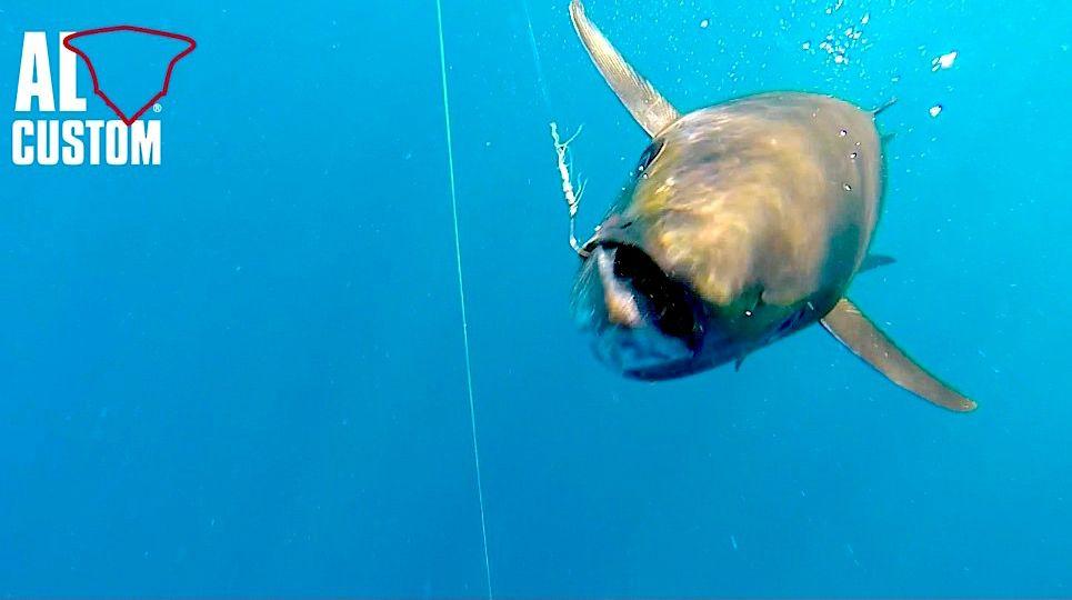 Drifting al tonno in Adriatico. Pesca in top shot e catch release