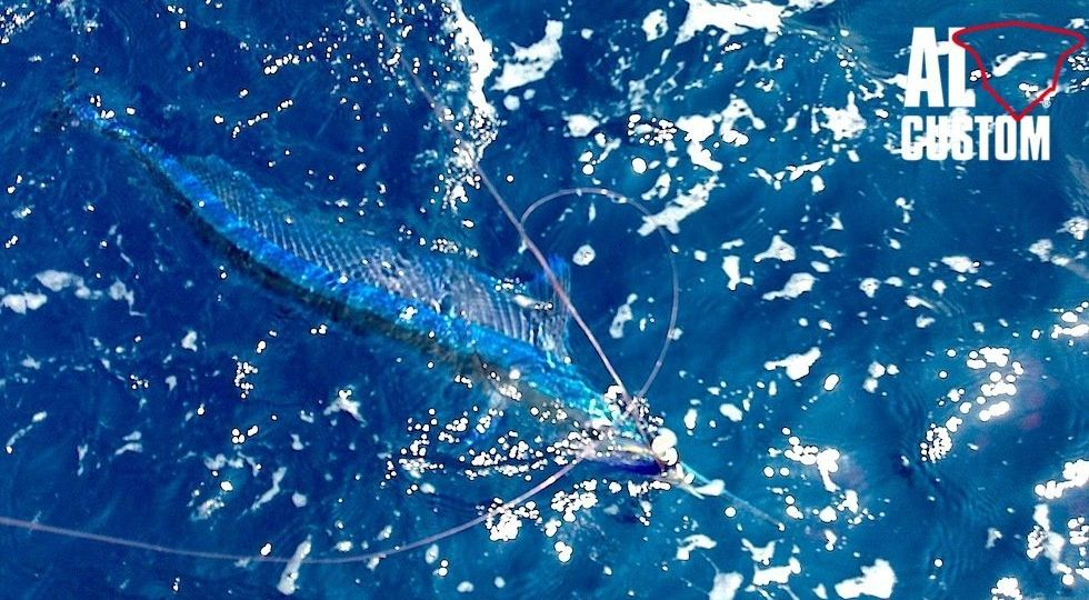 FISHING-ATTITUDE-aguglia-imperiale-2 (Demo)