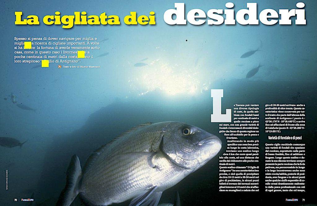 """Itinerari di pesca: davanti a Livorno il """"Ciglio di Antignano"""", hot spot da pesca"""