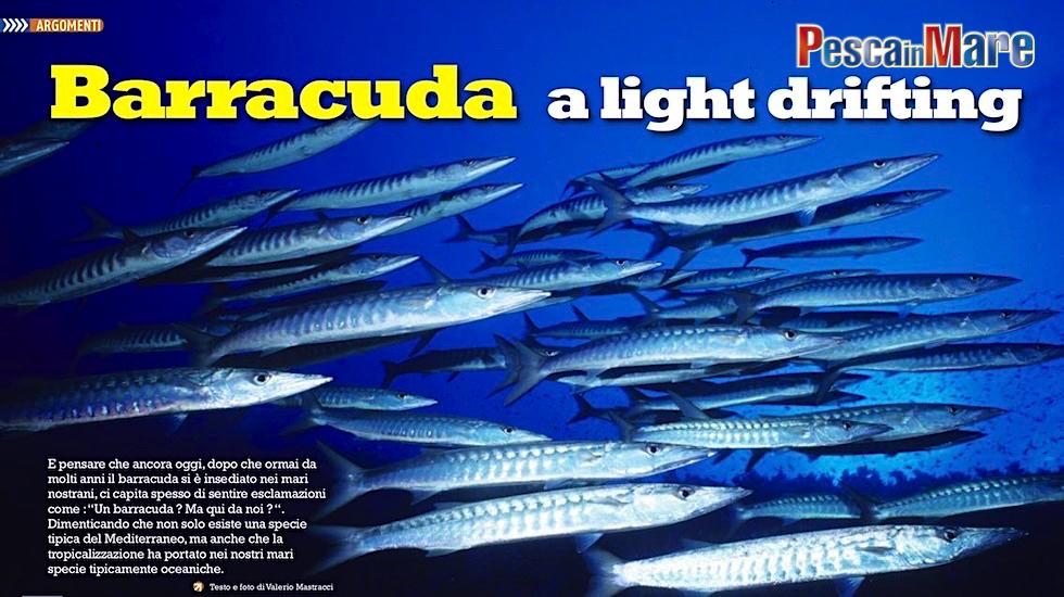 Light drifting ai barracuda. La pesca sportiva del barracuda in Mediterraneo.